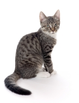 - За котки