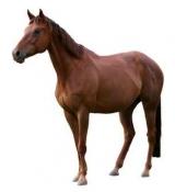 - За коне